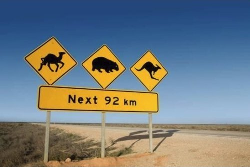Kangaroo Warning Sign Australia