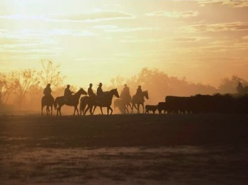 Stockmen and Cattle, Outback South Australia