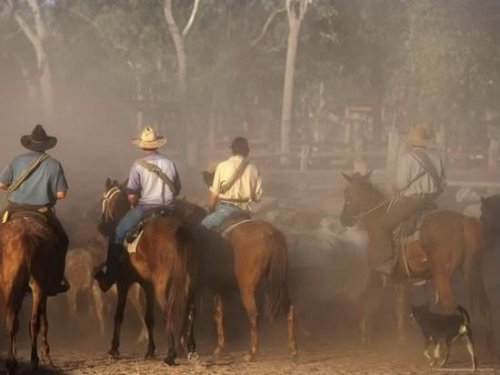 A Group of Stockmen Mustering Cattle