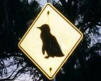 Tasmanian road sign. Not what you expected in the Australian climate?