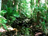 The tropical Australian climate grows magnificent rainforests like this one at the Daintree River