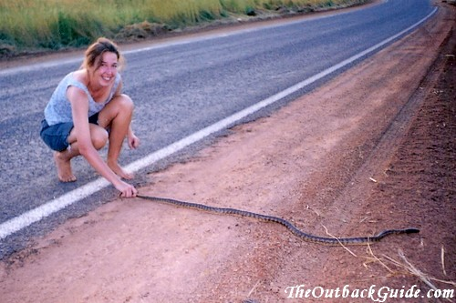 My first encounter with an Australian snake: a rock python on the road
