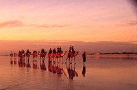 Sunset camel trek on Cable Beach in Broome