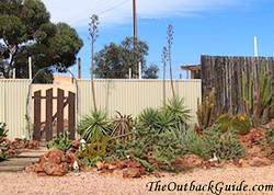 Faye's Desert Garden