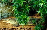 The most dangerous of all Australian animals: the saltwater crocodile