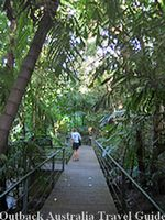Rainforest in Darwin City