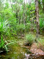 Typical example of monsoonal forest in Kakadu