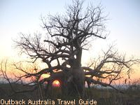 The sun is setting behind a boab tree. These trees only exist in the Kimberly