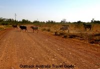 Cattle on Australian Outback track