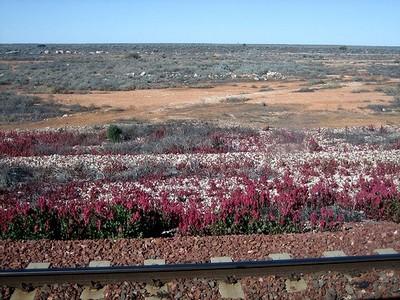 Railway across the desert
