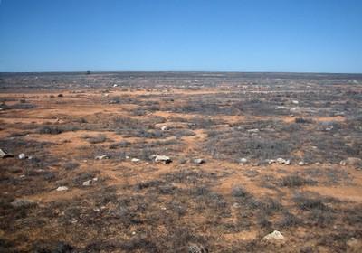 Vegetation in the Nullarbor Desert