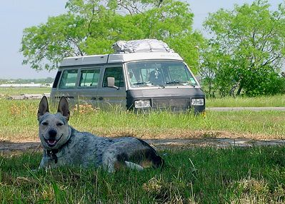Camping With A Dog...