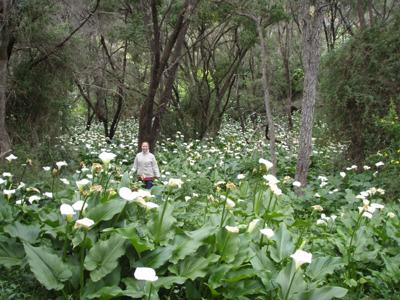 The lillies down south in WA