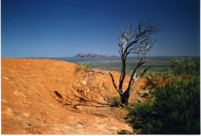 Vegetation atop Uluru, with Kata Tjuta in the background.